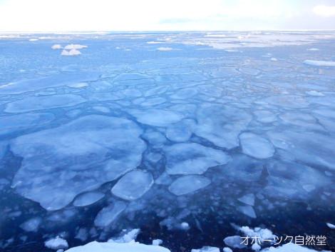 今日の流氷2